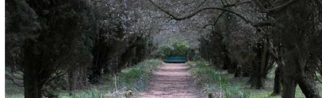 Provence_benchwebcrop1